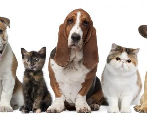 Get the best veterinary services