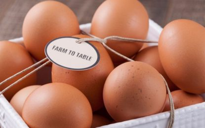 Norco Ranch – Are Eggs Super food For Health?